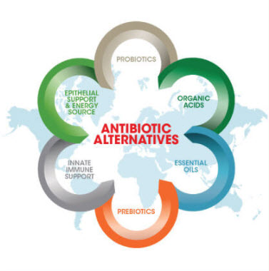 Antibiotic growth promoter alternatives