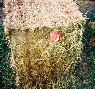 Hay bale untreated by a preservative with extensive drying damage