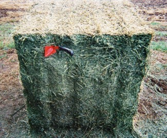 Hay bale treated with a preservative with moderate drying damage