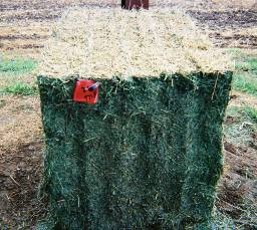 Hay bale treated with a preservative with low heat damage
