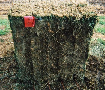 Hay bale untreated by a preservative with moderate heat damage