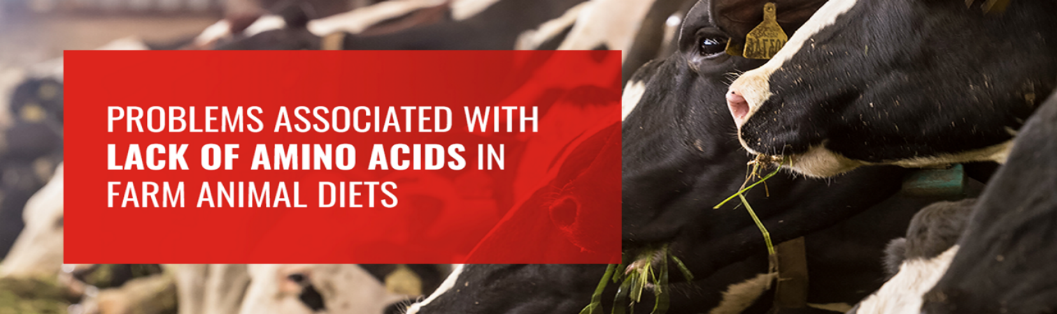 Problems Associated With Lack of Amino Acids in Farm Animal Diets