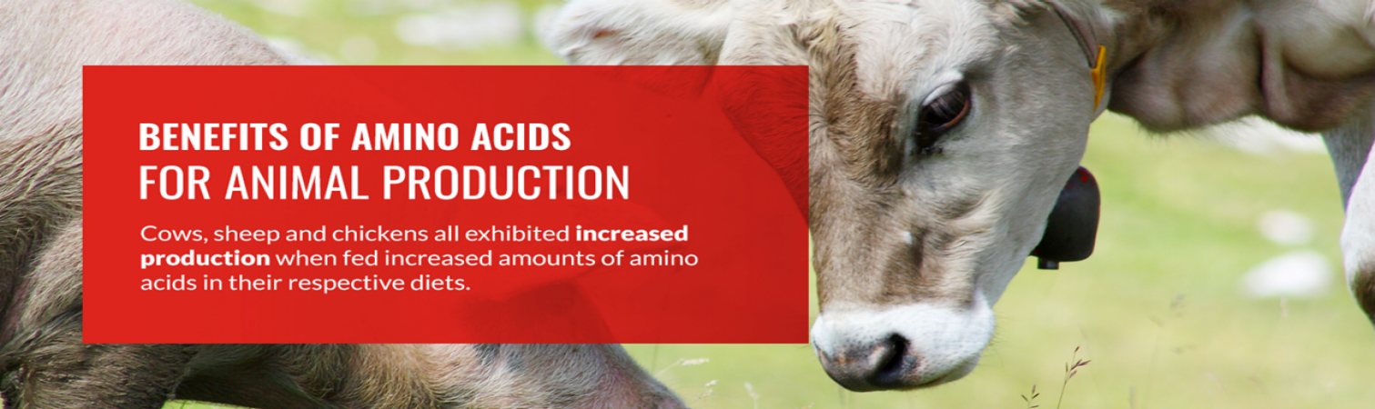 Benefits of Amino Acids for Animal Production