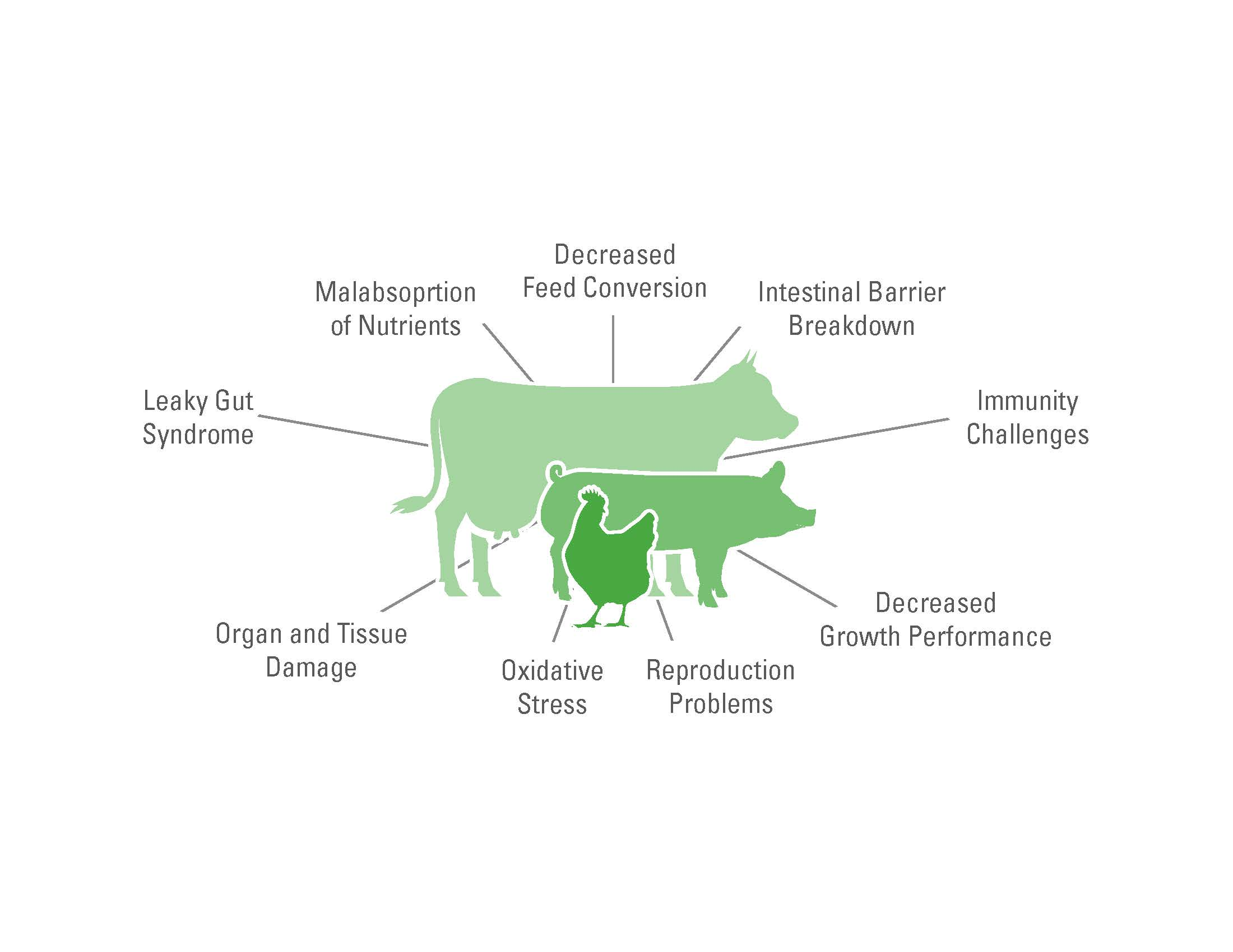 Feed Quality Resources for Dairy and Beef Cattle | Animal