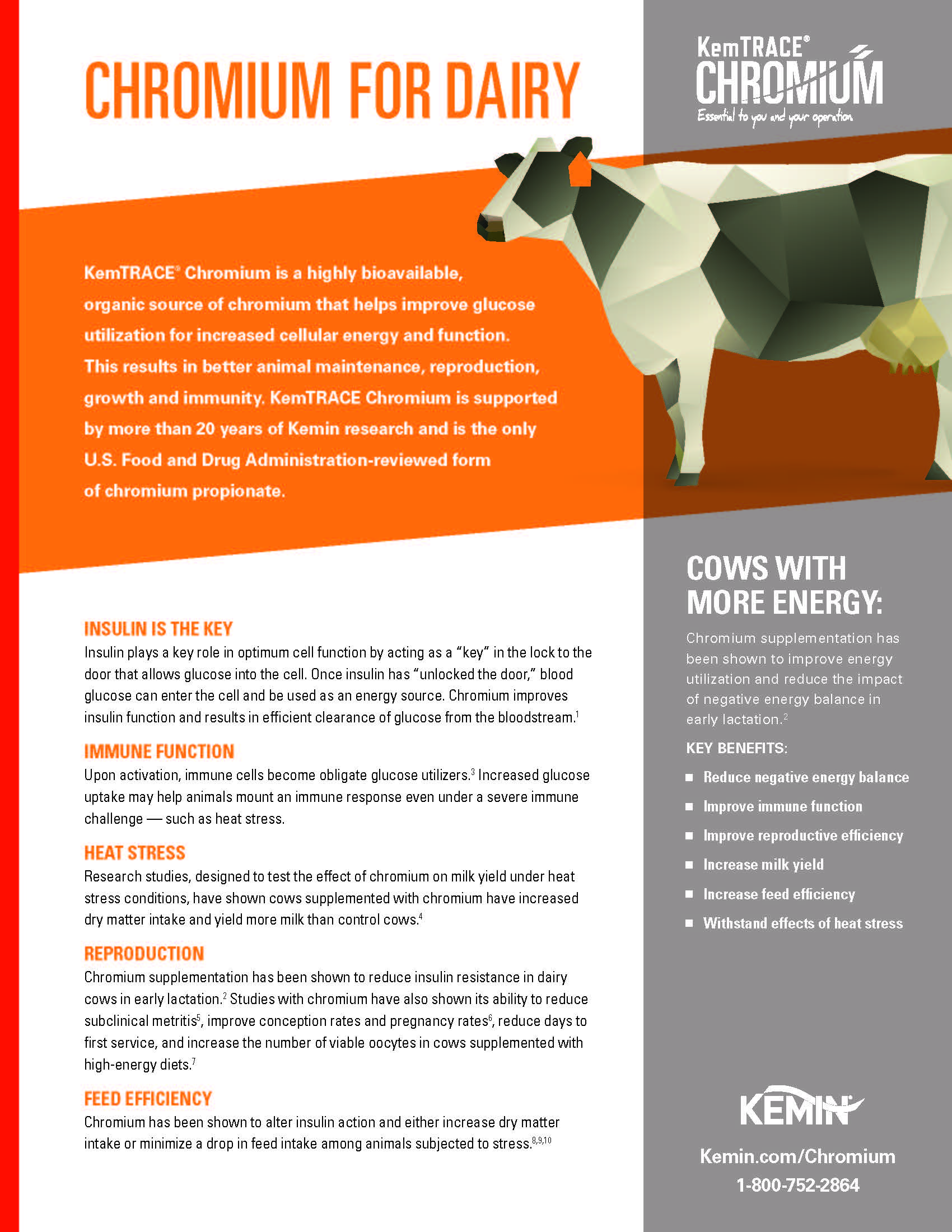 Nutrition Resources for Dairy Cattle | Animal Nutrition
